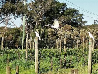 Mornington Peninsula: Eight great Pinot Noirs