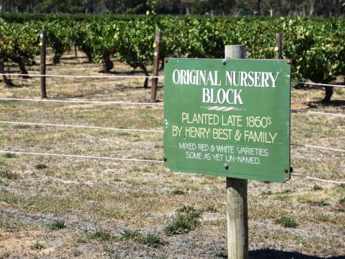 The world's oldest known Pinot Meunier and Pinot Noir reside here