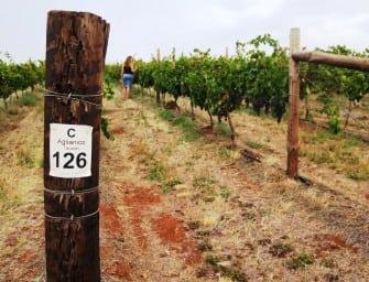 Chalmers they did: cutting edge Italian varietal Australian wines
