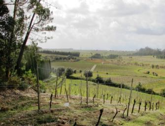 Bairrada tastings at Portuguese Wine School & Bar Douro