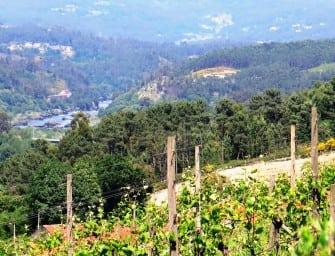 Portugal 2015 Vintage Report: Vinho Verde