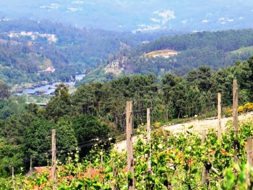 Sunny at Soalheiro - of course! Pictured: vineyards high above the Minho river