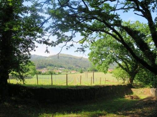 Set fair: the vineyard at Ameal