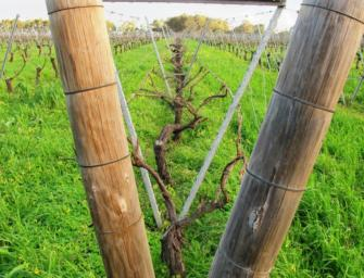 September Wines of the Month: two gems from Cullen Wines