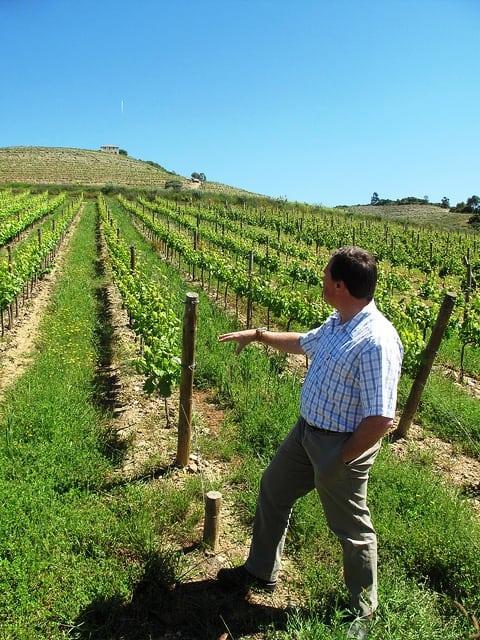 david guimaraens douro vineyard