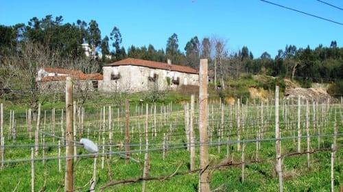 Quinta de Casa Nova