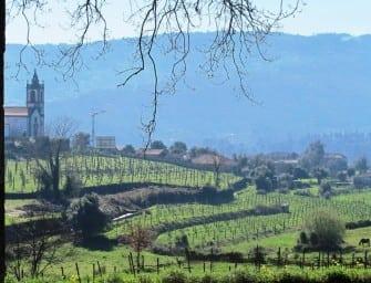 Pintia seals the deal at Iberian Nights; next up Galicia -v- Vinho Verde