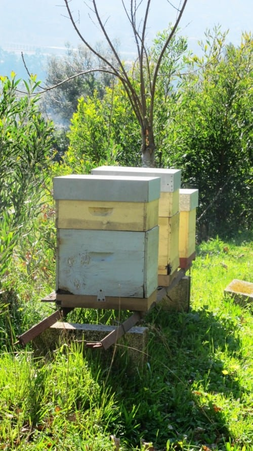 Worker bees for better pollination and honey