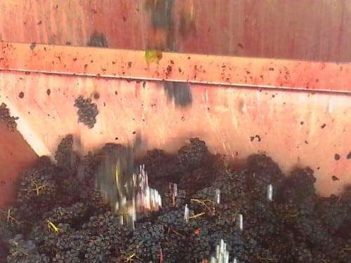 Raining grapes!