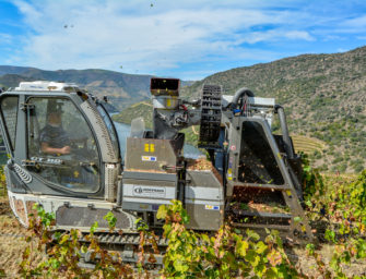 Symington Douro Vintage Report 2019: harvest by hand & machine