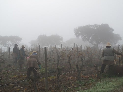 Winter pruning at Esporoa
