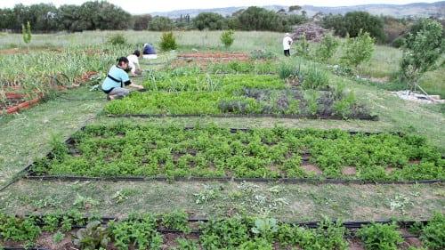 Fermentasian herb garden - photo credit Fermentasian