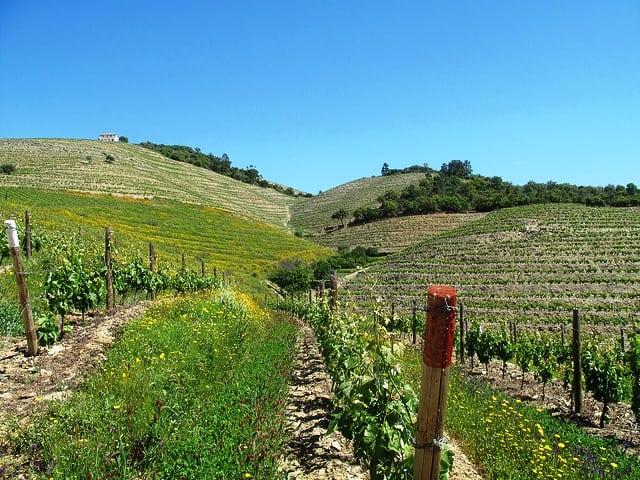 fladgate trip 2011 vineyards