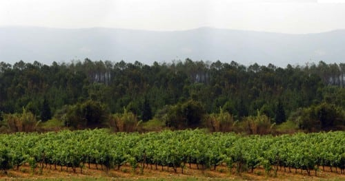 foz de arouce vineyard