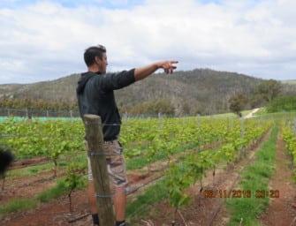 Revisited: Sinapius, Tasmania