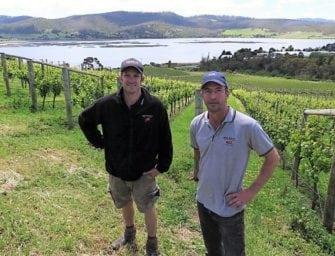 Derwent Estate, Tasmania: vertical tasting, vertical growth