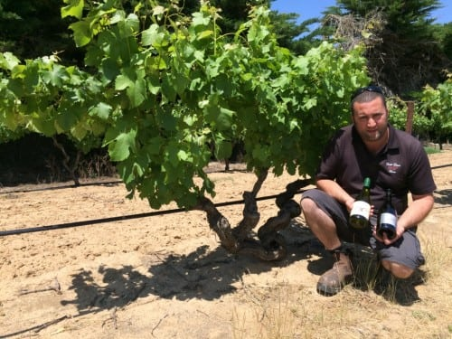 Marco Cirillo with old vine 1850s Semillon