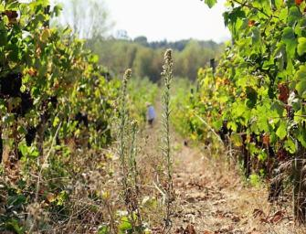 An unmissable vintage: 2015 Bairrada Baga, plus other news