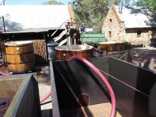 And here it comes, into the Mintaro slate Clare Valley open fermenters