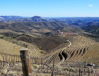 Simplesmente Vinho 2018 Part 2: visit highlights