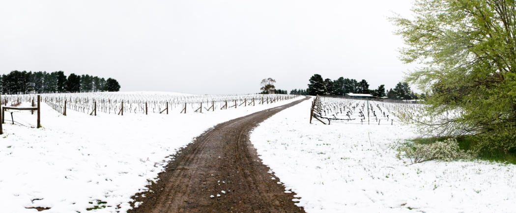 Lark+Hill+Vineyard-+Snow+Panorama