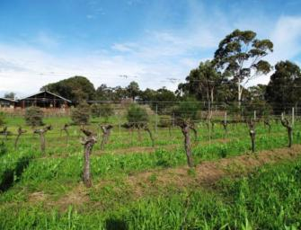 Australian Chardonnay: Exploring the journey with Liberty Wines