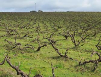 Blewitt away: my benchmark International Grenache Day wine