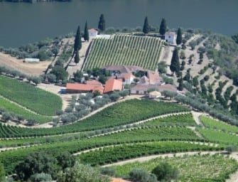 Douro wine: onward upward in quality and differentiation