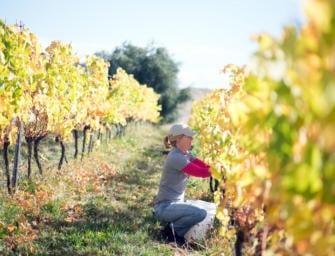 Stargazer: from dream to reality, Sam Connew's Tasmanian wines