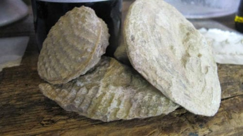 vale_da_capucha_vineyard_fossils