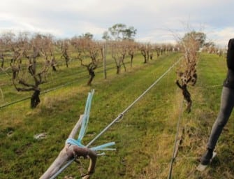 Highlights: my visit with Saltram, the Barossa