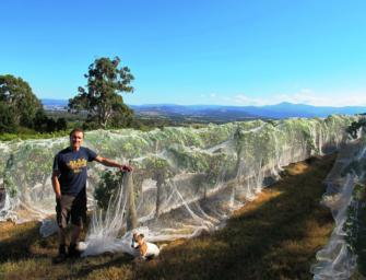 Marmalade & wine: a visit with Yarra Yering